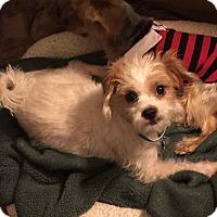Adopt A Pet :: Tara-VIEW MY VIDEO! - Los Angeles, CA