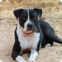 Adopt A Pet :: Freedom - San Antonio, TX