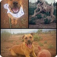 Adopt A Pet :: Lisa - Alamogordo, NM