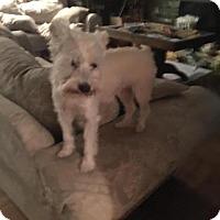Adopt A Pet :: Blanca Adoption pending - East Hartford, CT