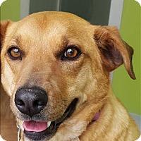 Adopt A Pet :: Trixie - Neosho, MO