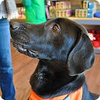 Adopt A Pet :: Chewie - in Maine - kennebunkport, ME