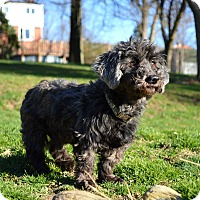Adopt A Pet :: Shadow - Pittsburgh, PA