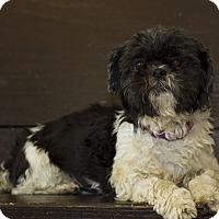 Adopt A Pet :: Lily Bean - Baton Rouge, LA