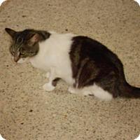 Adopt A Pet :: Ella - Bonita Springs, FL