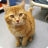 Adopt A Pet :: Taylor - Bellevue, WA