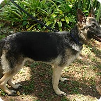 Adopt A Pet :: Kilo - Riverview, FL