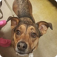Adopt A Pet :: Daisy Duke - South Bend, IN