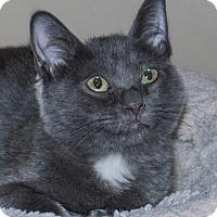 Adopt A Pet :: Blue - Elmwood Park, NJ
