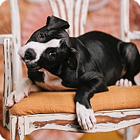 Adopt A Pet :: Joe Jackson - Portland, OR