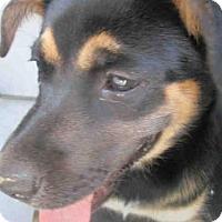 German Shepherd Dog Mix Dog for adoption in Conroe, Texas - RIZ