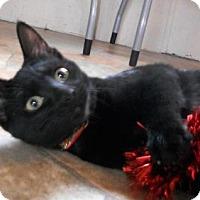 Adopt A Pet :: Theodora - Siren, WI