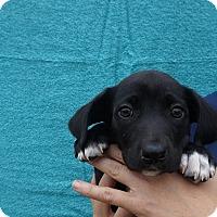 Adopt A Pet :: Ajax - Oviedo, FL