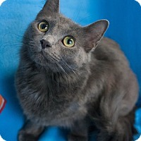 Adopt A Pet :: Lucy - Muskegon, MI