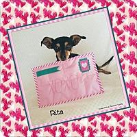 Adopt A Pet :: Rita - Yucaipa, CA