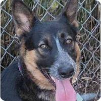 Adopt A Pet :: Andy - La Honda, CA