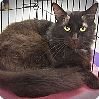 Adopt A Pet :: River - Seminole, FL