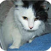 Adopt A Pet :: Jewel - Dallas, TX