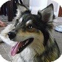 Adopt A Pet :: Sky - Hamilton, ON