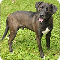Adopt A Pet :: Maximus - Chicago, IL