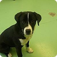 Adopt A Pet :: Norma Jean - Gadsden, AL