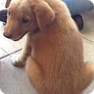 Adopt A Pet :: Skip