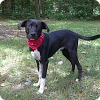 Adopt A Pet :: Eeyore - Mocksville, NC