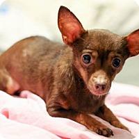 Adopt A Pet :: Rosa - New Orleans, LA