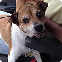 Adopt A Pet :: Jubilee - Clarksville, TN