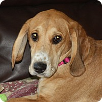 Adopt A Pet :: Bernadette - PENDING, in Maine - kennebunkport, ME