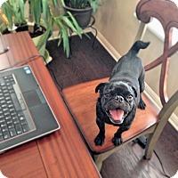Adopt A Pet :: Rumbles - Austin, TX
