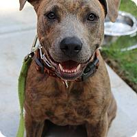 Adopt A Pet :: Danny - Atlanta, GA
