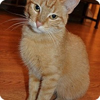 Adopt A Pet :: Rusty - Reston, VA