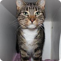 Adopt A Pet :: Abbey - Hamilton, ON