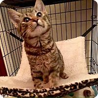 Adopt A Pet :: Athena - McDonough, GA