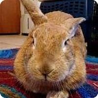 Adopt A Pet :: Molly - Woburn, MA