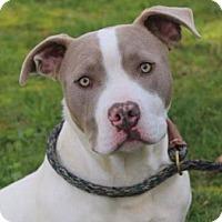 Adopt A Pet :: JERRY - Red Bluff, CA