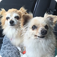 Adopt A Pet :: Phyllis and Loretta - Los Angeles, CA