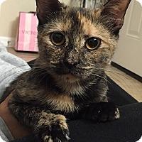 Adopt A Pet :: Pearl - Tampa, FL