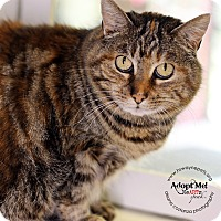 Adopt A Pet :: Angel - Lyons, NY
