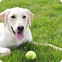 Adopt A Pet :: Rumer - Lake Odessa, MI