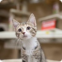 Adopt A Pet :: Iris - Statesville, NC