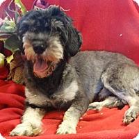 Adopt A Pet :: Pumba - Vacaville, CA