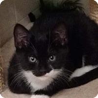 Adopt A Pet :: Victory - Merrifield, VA