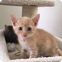 Adopt A Pet :: Archie -S - adoption pending - Landenberg, PA