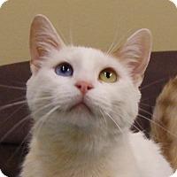Adopt A Pet :: Luna - Monroe, MI