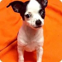 Adopt A Pet :: Becca (ARSG) - Santa Ana, CA