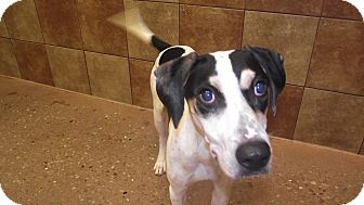 Hound (Unknown Type) Mix Dog for adoption in Appleton, Wisconsin - Harvell