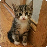 Adopt A Pet :: Zoli - Evans, WV