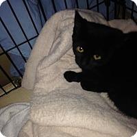 Adopt A Pet :: Lee Lee - Mt. Laurel, NJ